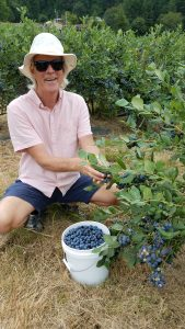 Ross picking organic blueberries near Tillamook